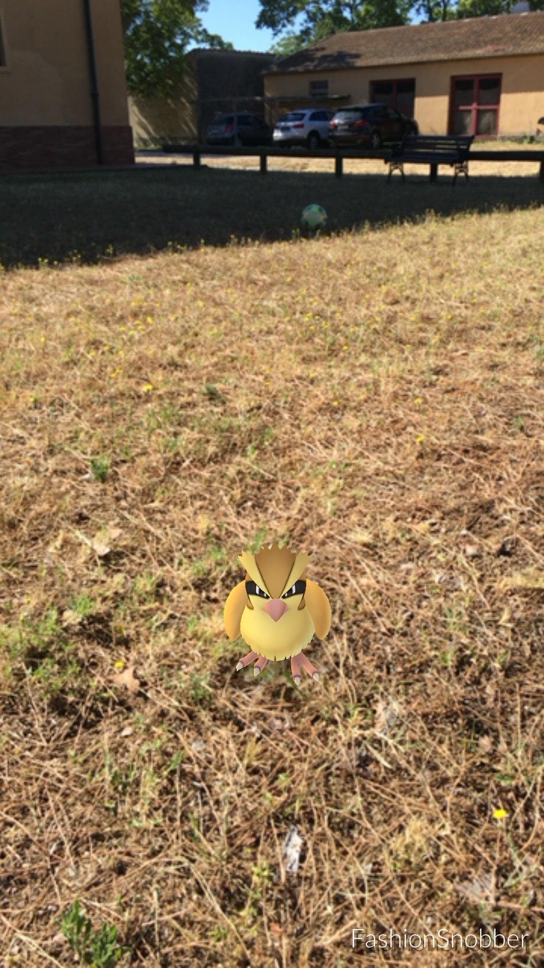 Pidgey Pokémon Go.