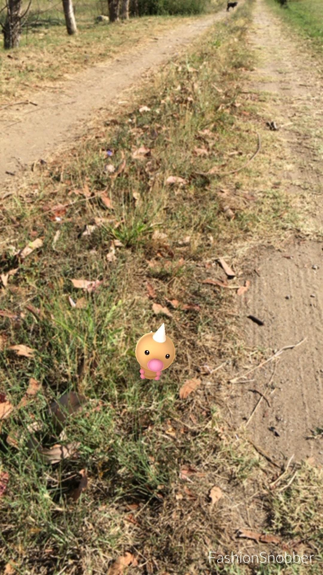 Weedle Pokémon Go.