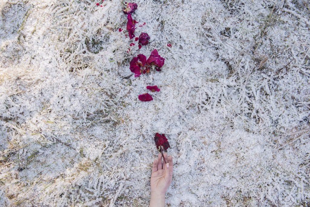 The Novel of Nature Michela Taeggi